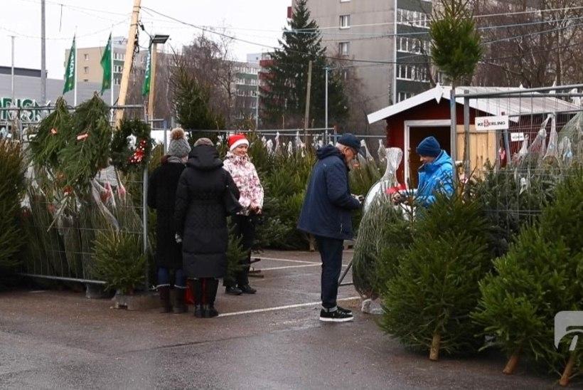 ÕL VIDEO | Jõulukuuse saab kätte iseteenindusplatsilt. Kuusemüüja: eks see on suuresti usalduse peale
