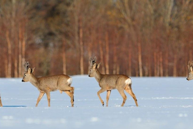 Mida tähendab olematu talv meie loodusele?
