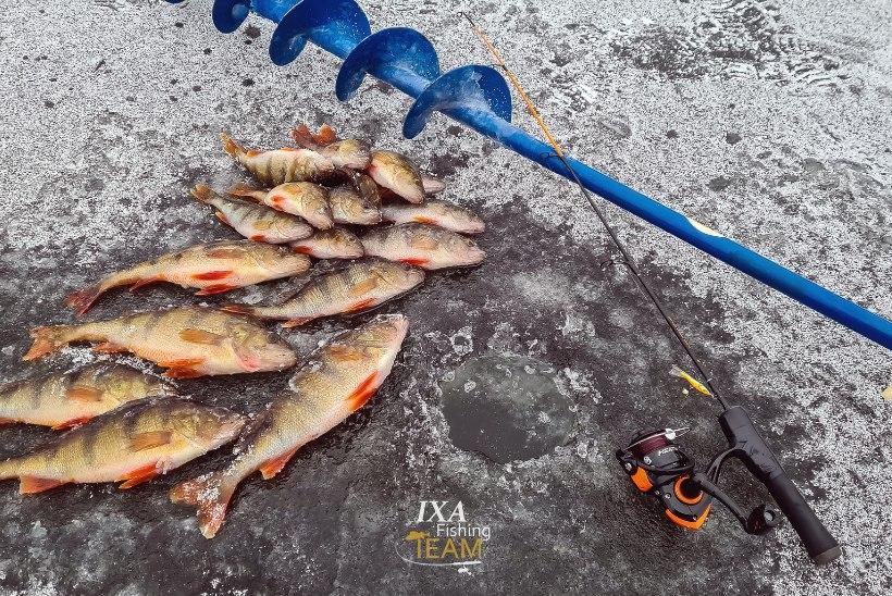Kalapüügieeskirja muudatustega seatakse uued päevalimiidid harrastuspüügile