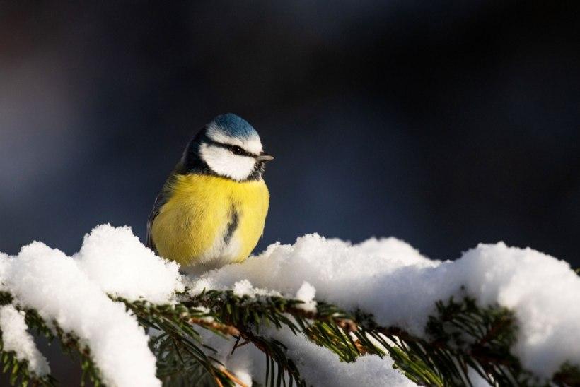 Talv tuleb: pildistame loodust ja linde
