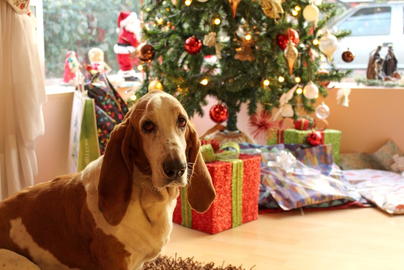 Ohtlik šokolaad, pakkepaelad ja ilutulestik ehk Kuidas tagada lemmikloomale turvalised pühad?