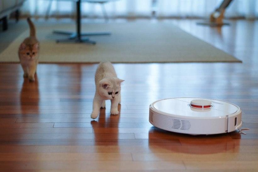 Nutikas abimees ehk Kuidas valida robottolmuimejat?