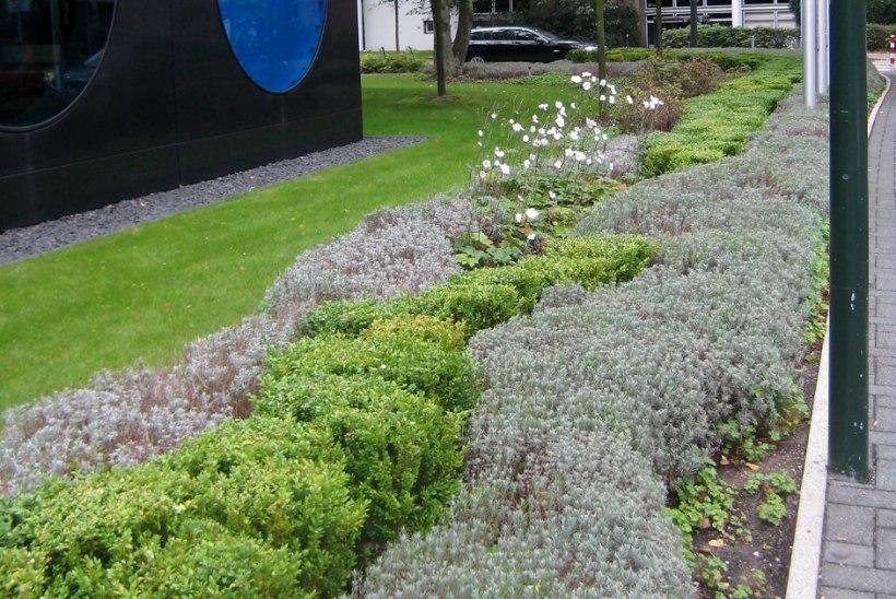 INSPIRATSIOONIKS | Too aeda vaheldust erksavärviliste taimedega