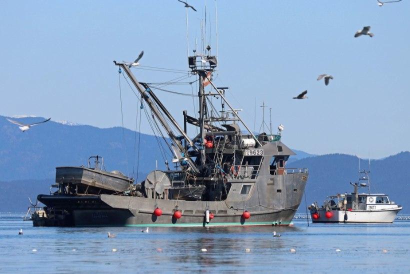 Heeringa genoomi uuringud edendavad säästvat kalapüüki