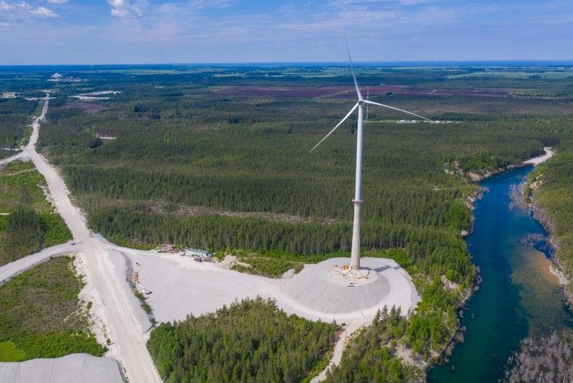 JULGEOLEKUOHT: Sõnajalad peavad Aidu tuulepargi tuulikult labad eemaldama