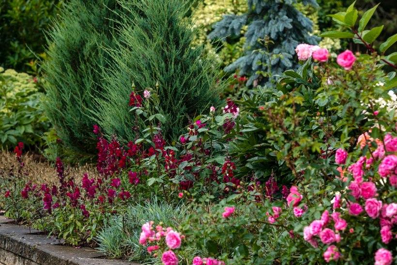 Aasta Kodu 2019 aiapreemiad ja finalistid