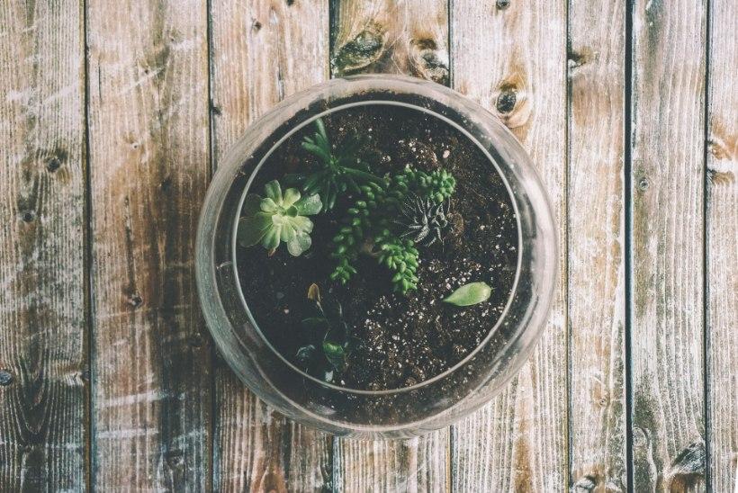 Kevadeni on veel aega! Klaaspurgi sisse mikroaia loomine pakub rohenäpule rohkelt rõõmu