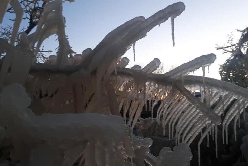 FOTOD   Külmakraadid on Valaste joa ümbruse muutnud muinasjutuliseks jäämaailmaks