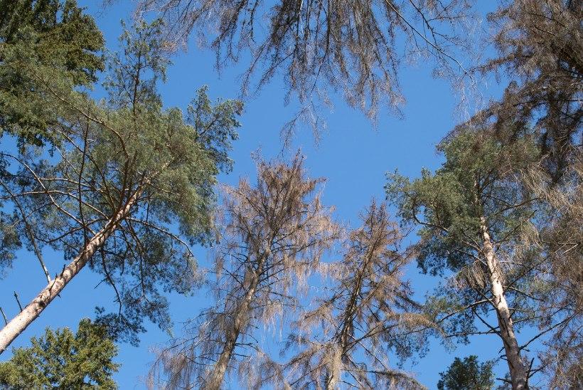 Hendrik Relve miniloeng: kas Eesti mets saab otsa?