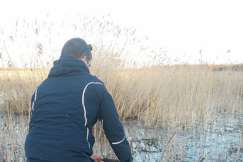 Keskkonnainspektsioon teeb haugi kudeaegset järelevalvet nii maal, vees kui ka õhus