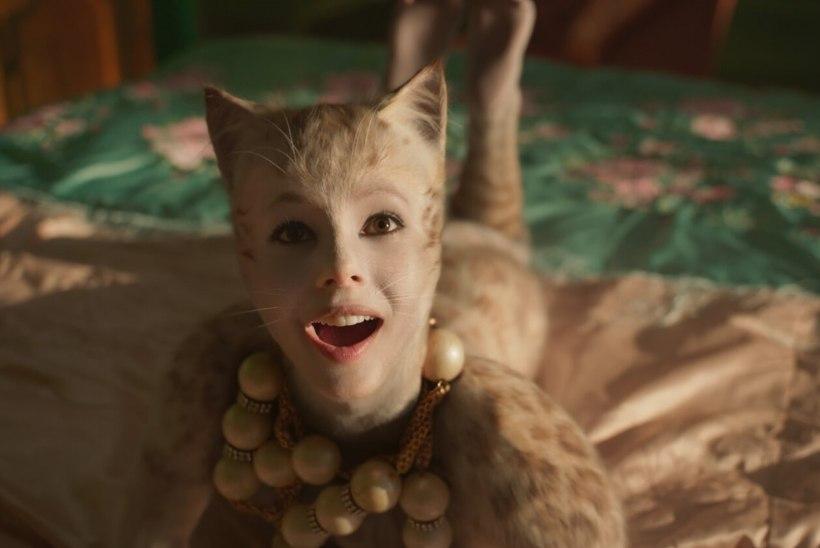 """Kuldvaarikate jagamisel tegi platsi puhtaks """"Cats"""""""