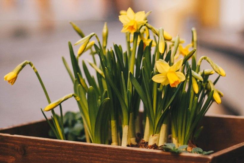 HOROSKOOP | Sinu selle kuu teejuht, mis aitab teha igapäevaseid õigeid otsuseid!