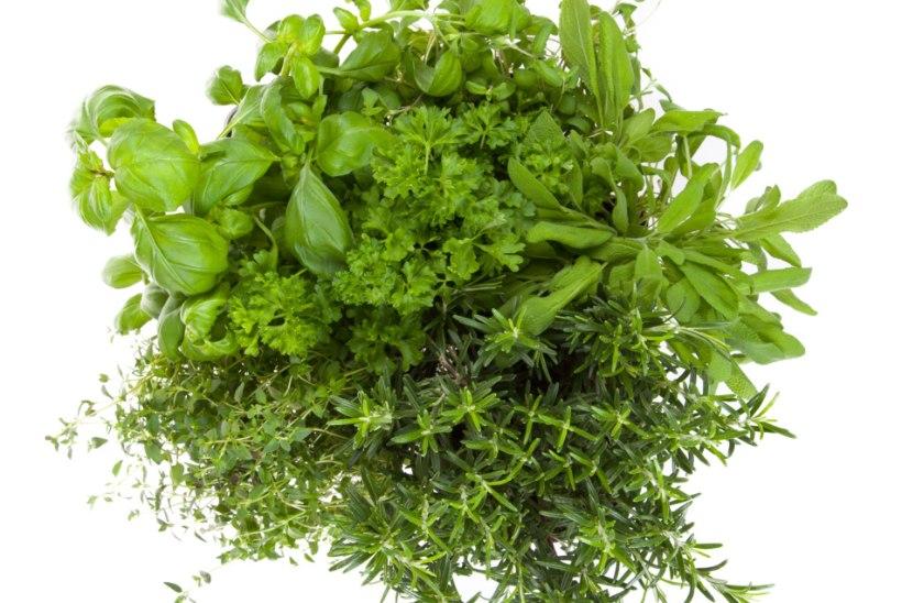 Nutika perenaise nipid, kuidas ühelt taimelt koguda mitu saaki