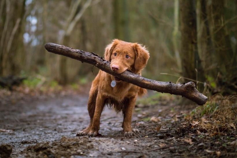 Tähelepanu, loomaomanik! Puugid on juba aktiivsed! Kuidas oma lemmikut nende eest kaitsta?
