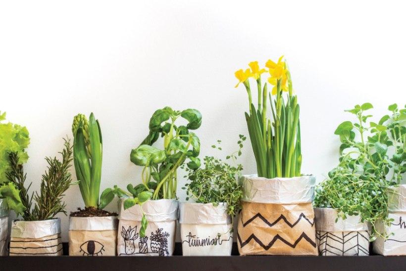 Tetrapakkide uus elu: meisterda neist nägusad taimepotid!