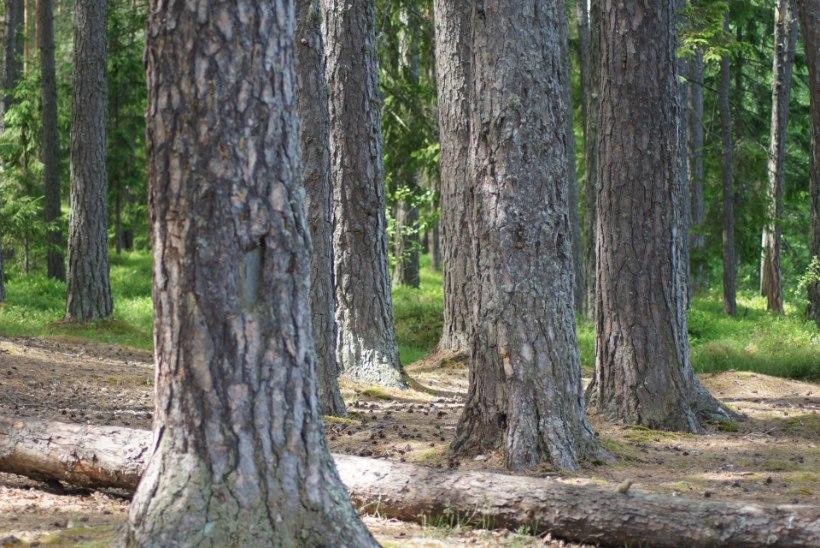 Majandamata mets kaotab väärtust – tegutse õigel ajal!