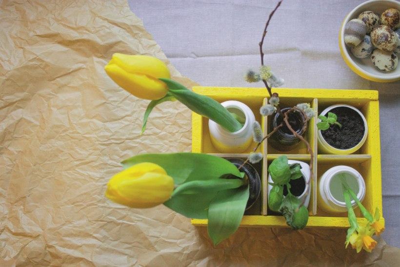 VANAST UUS: kui vitamiinitopsidest võrsuvad lillevaasid