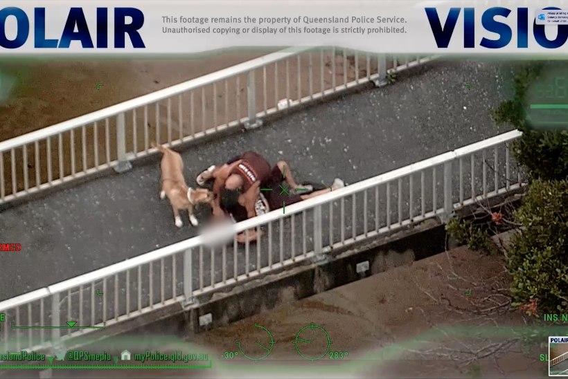 VIDEO | Koeraga sörki teinud austraallane peatas põgeneva narkopäti