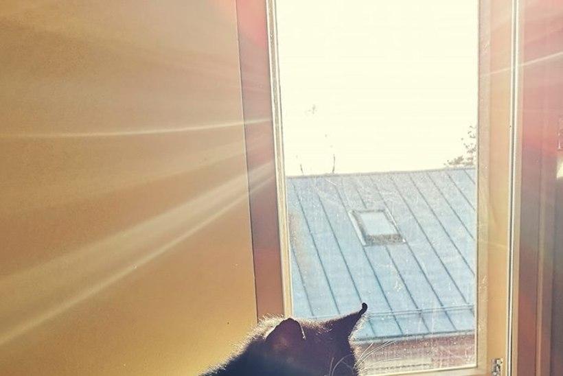 VIIRUSE PLUSSPOOL: kodutud kassid naudivad hotellielu!