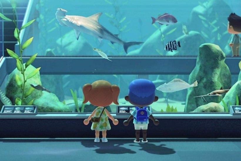 LEIDLIK! Päris akvaarium kolis oma tuuridega populaarsesse Nintendo mängu