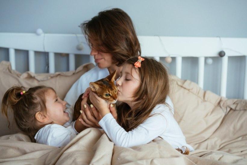 Allergiline õietolmu või lemmiklooma suhtes? Tegele allergia põhjuse, mitte sümtomitega!