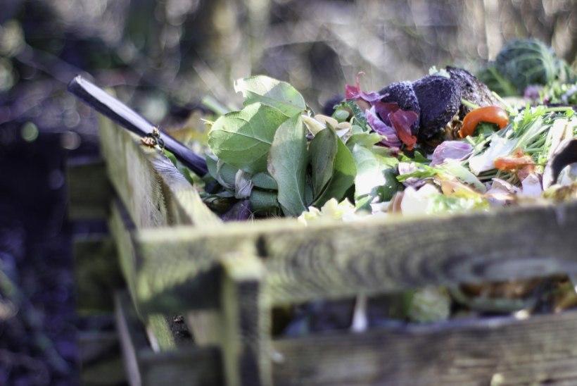 KOGU TÕDE KOMPOSTIMISEST: kuidas luua toimiv kompostikast?