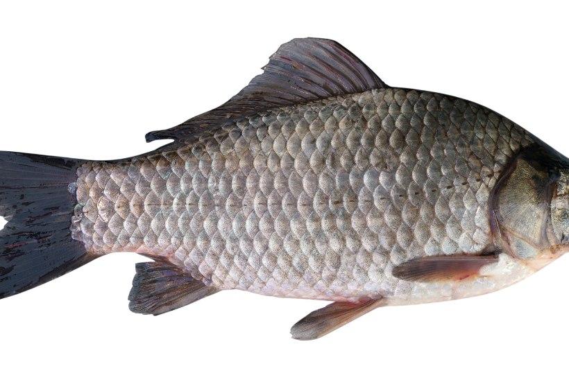 Kevad kalavetel − ahvenale mõjus soe talv hästi, siig tunneb ennast halvasti, forelli jagub