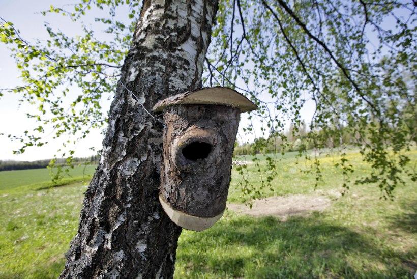 Kutsu laululinnud õuele! Nüüd on viimane aeg panna lindudele üles pesakast
