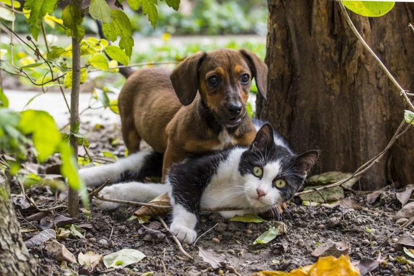 Loomaarst õpetab: nii kaitsed lemmikut puukide eest
