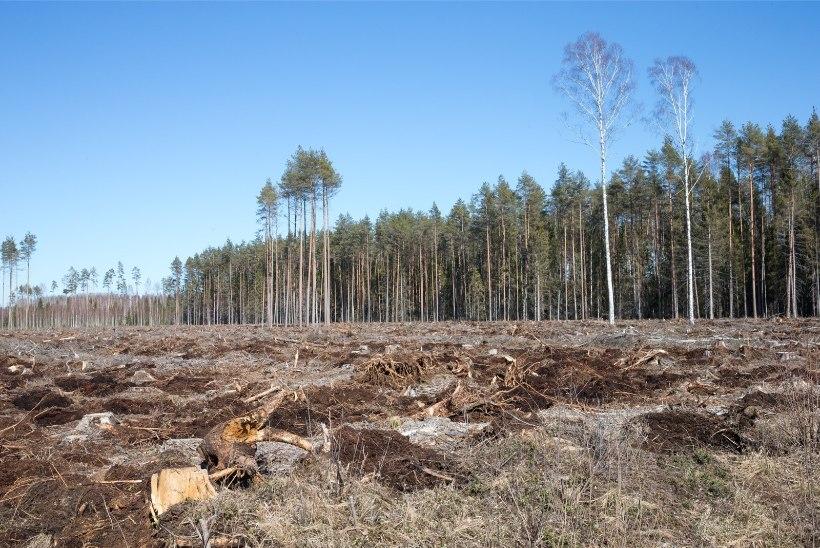 Keskkonnaministeerium tahab kehtestada kaitsealadel raierahu ning suurendada karistusmäärasid rikkumiste eest
