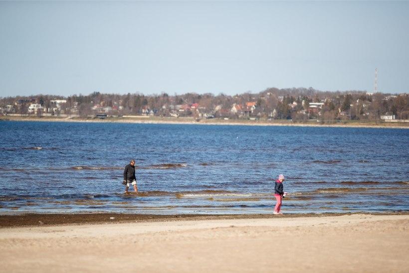 GALERII | Suvesooja kevadpäeva nauditakse Tallinnas täiel rinnal