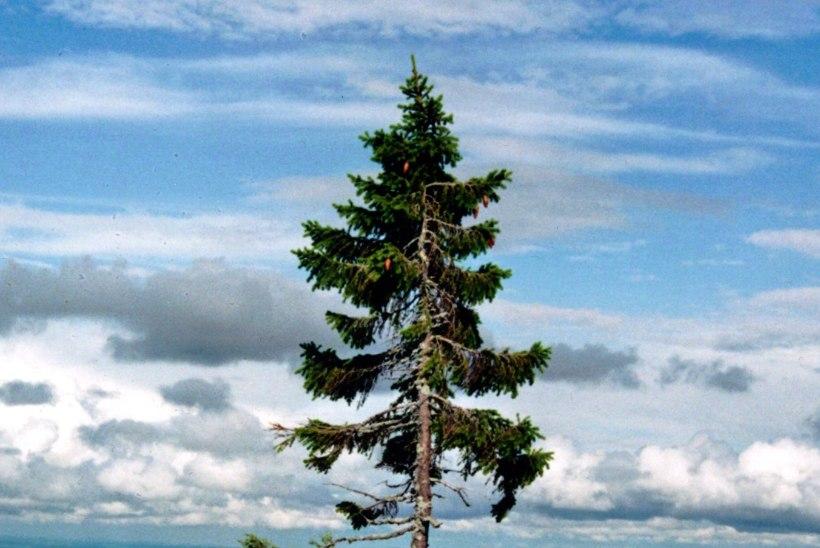 Kas teadsid, millal hakkasid Maal kasvama esimesed puud?