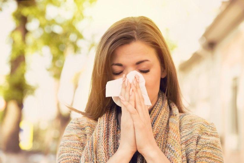 HÄIRIV NOHU? Allergoloog selgitab, millal võiks kahtlustada õietolmuallergiat