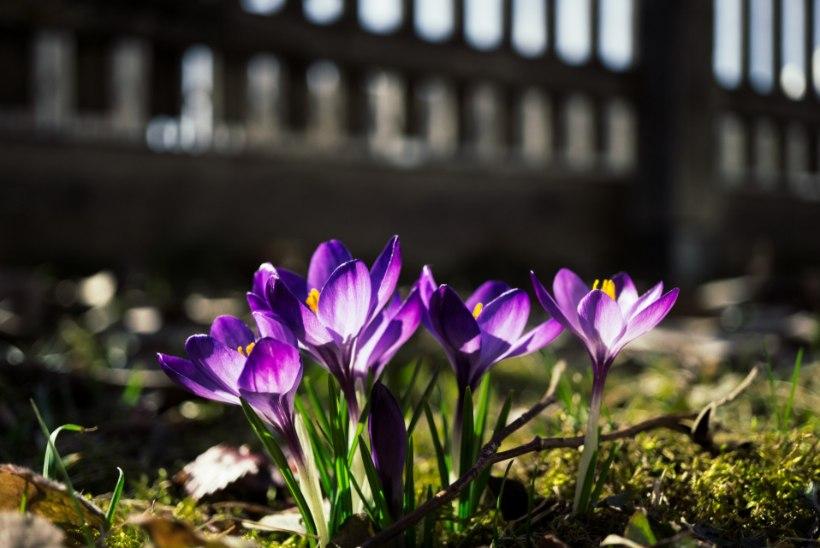 AIAKALENDER   Töine aprill toob kevadetunde! Millest alustada?