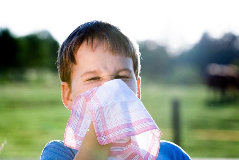 Kolm levinumat allergiat ja nõksud, kuidas neid leevendada