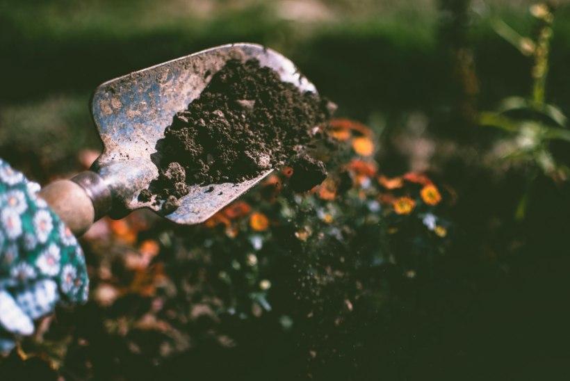 NÄPUD MULDA! 10 head põhjust, miks aias askeldada