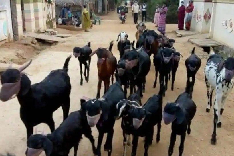 KOROONAHIRM: India kitsekasvataja kattis loomade koonud maskidega