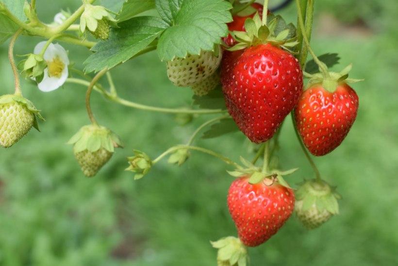 AIAKALENDER   Töine mai annab sügisel viljaka saagi! Millest alustada?