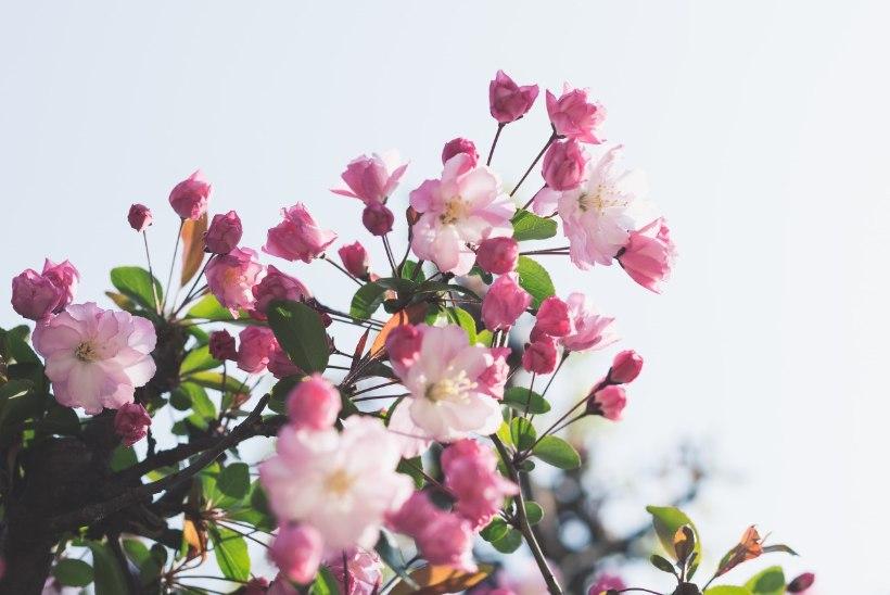 Kas õietolmuallergia tähendab lõpparvet taimedega? Kaks allergikut jagavad kogemusi!