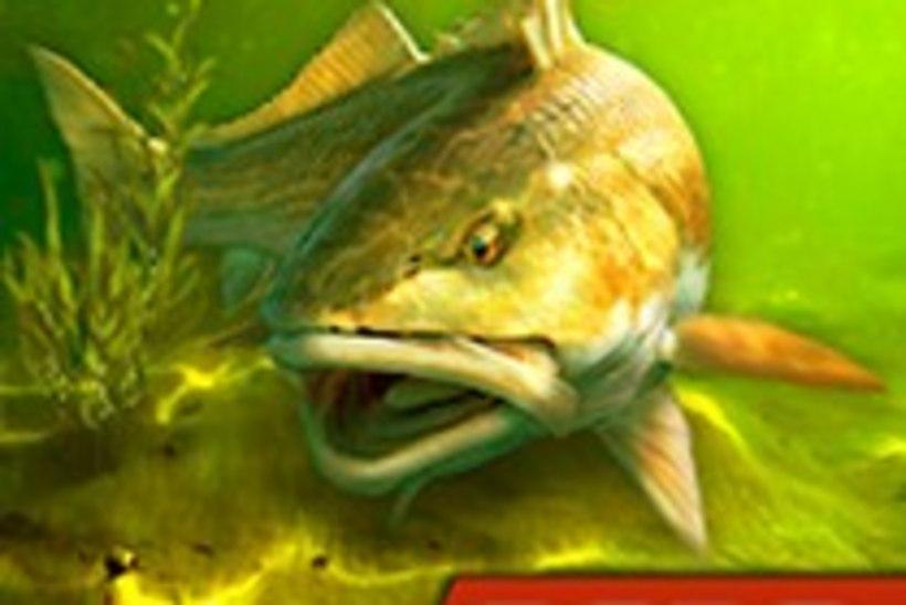 Kui kalale ei pääse, aitab arvuti