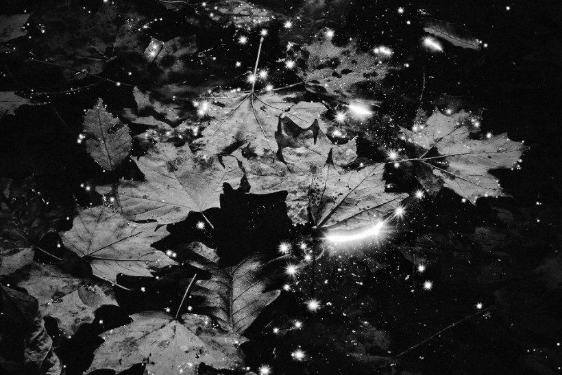 Foto | Kaupo Kikkas: mida me näeme ja mida arvame nägevat