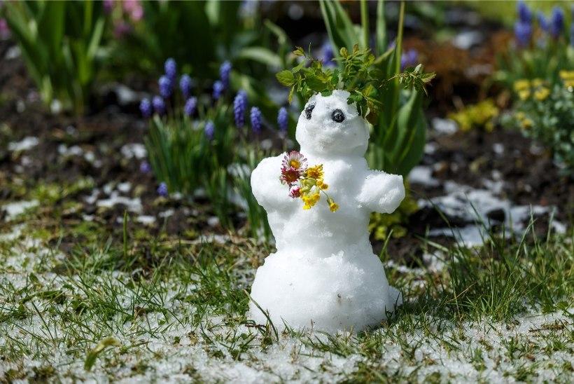FOTOUUDIS | Raplamaal sai 13. mail lumememme ehitada