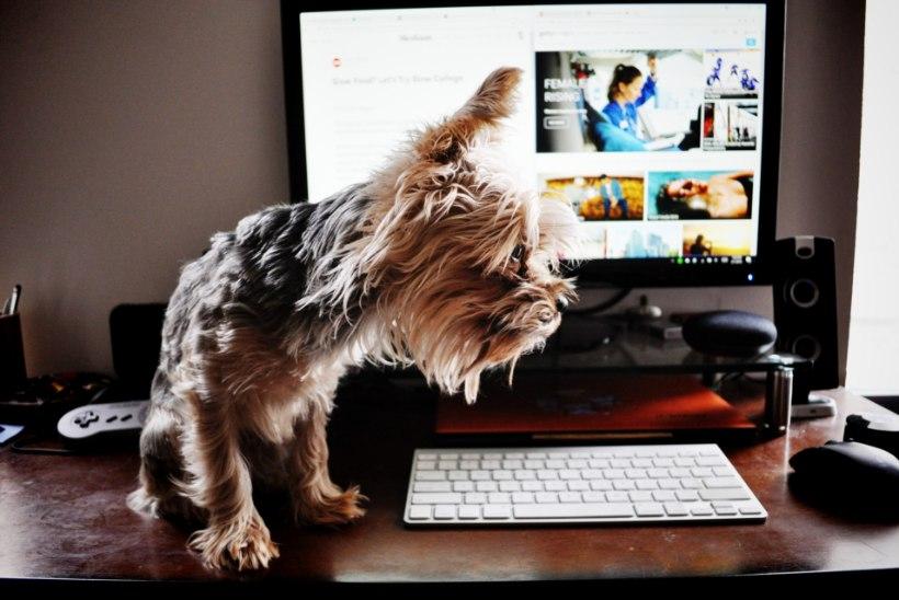 Kodukontori trend jätkub! Kes vastutab tööandja arvuti eest sinu kodus?
