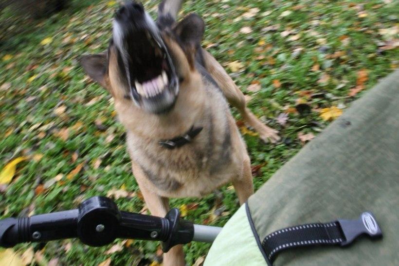 Loomarünnak tõi trahvi: aiast välja pääsenud koer ründas naist