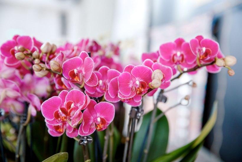 Riigikohus mõistis lilleäri endised töötajad ärisaladuse loata kasutamises õigeks