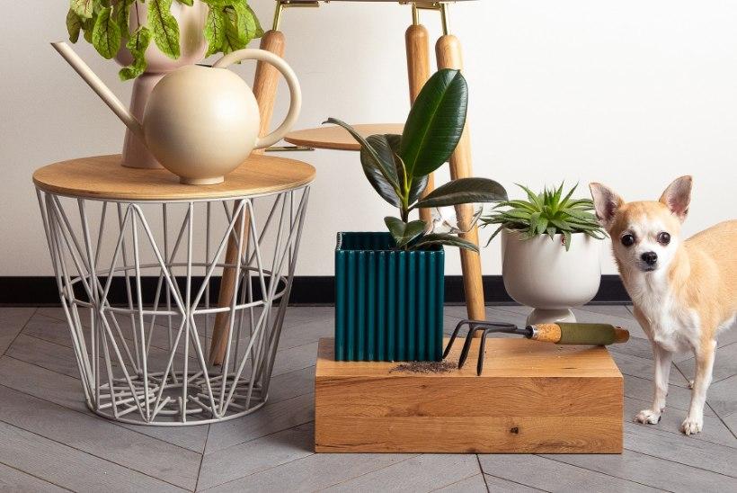 Inspiratsiooni kodu värskenduseks: 4 kevadist trendi