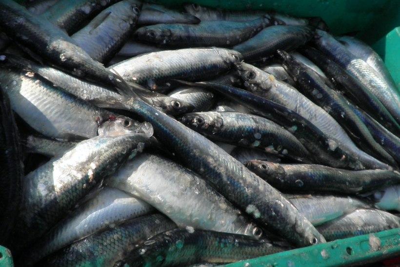 Selgusid aasta kalandusteo võitjad