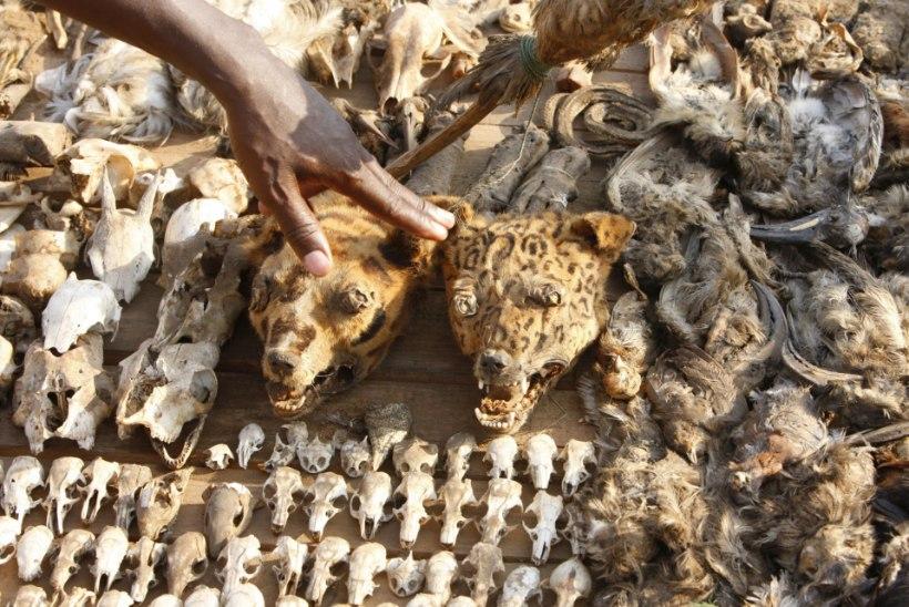MUSTA MANDRI MUST MAAGIA: rituaalid surnuaial, poodud kassid ja väljakule peidetud puuslikud