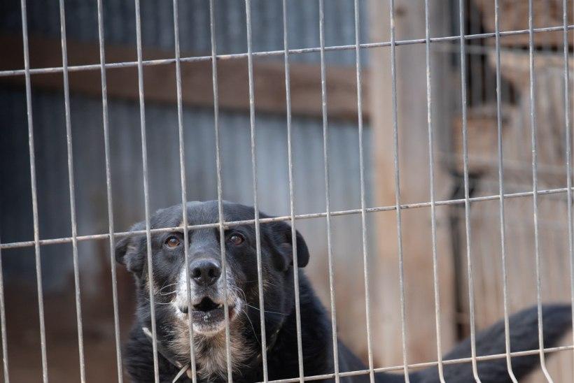 Ukrainas pandi koerad omanike võlgade tasumiseks oksjonile müüki