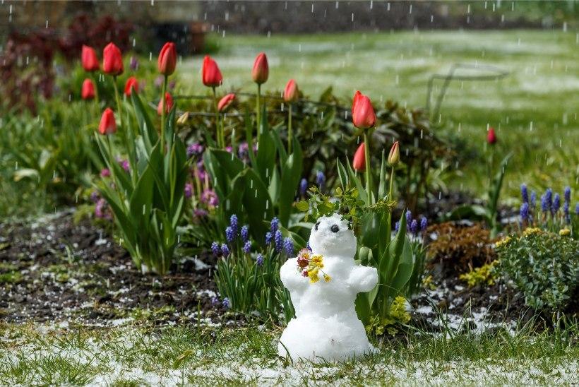 Ilmauurija: talv oli nii soe, et tundubki, et mai on tavalisest külmem